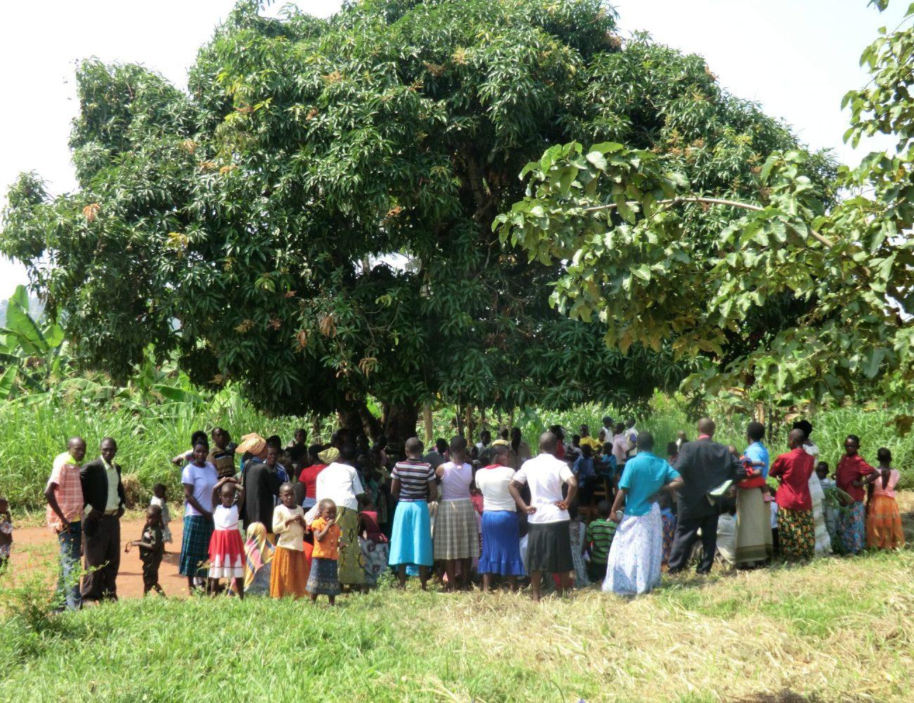 Versammlung unter dem Mangobaum
